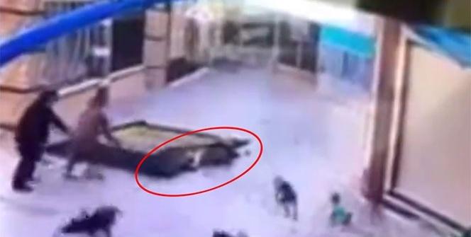 Korkunç kaza! Böyle ezildi!