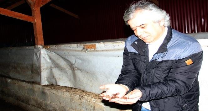 """Prof. Dr. Mustafa Türkmen: """"Hem verimi artırıyor hem de hastalıklara karşı koruyor"""""""