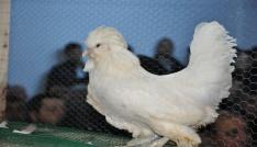 Simavda ilk kanatlı hayvan mezatı