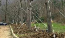 Maçka Parkından ağaç taşıma işlemi sona erdi