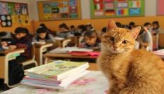 Veli şikayetiyle öğrencilerden ayrılan Tombi, okula dönüyor