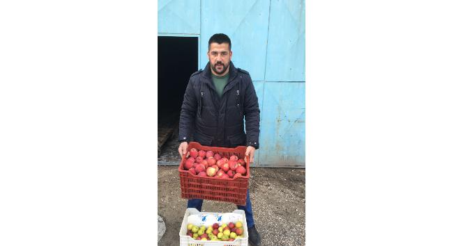 Senirkentte Afrindeki Mehmetçik için 1 kasa elma kampanyası