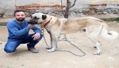 Kötü alışkanlıklarından hayvan sevgisiyle kurtuldu
