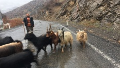Beytüşşebaplı engelli çobanın yaşam mücadelesi