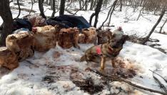 Tuncelide 4 sığınak imha edildi, 150 kiloluk patlayıcı ele geçirildi
