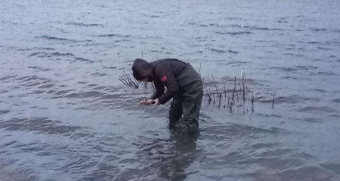 Aygır Gölünde zebra midye tehlikesi