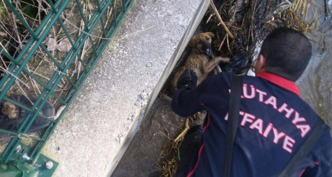 Sulama kanalına düşen köpeği itfaiye kurtardı!