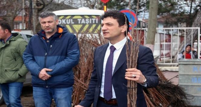 Trabzon Hurması, kivi ile yarışacak