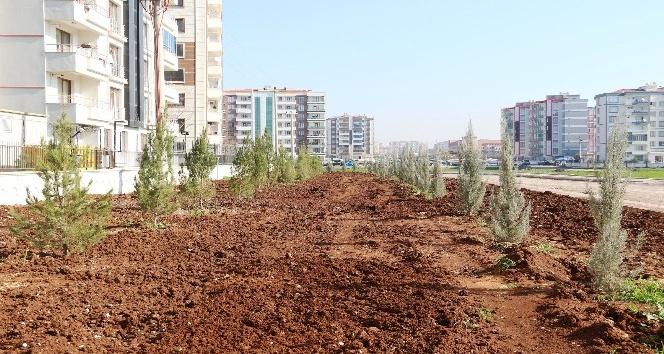 Bağlar Belediyesi yeşil alan oluşturma çalışmalarına devam ediyor