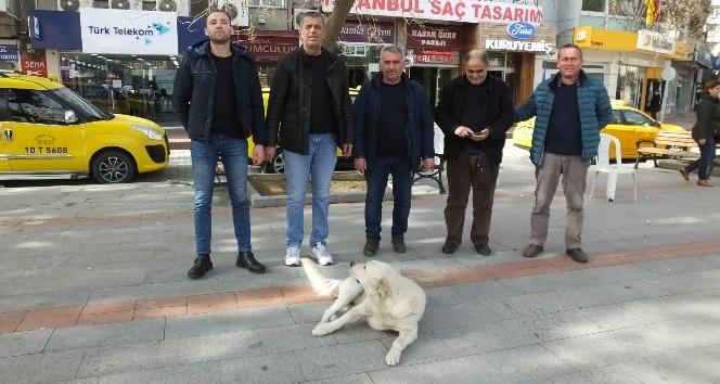 Burhaniye'de sokak köpeği taksicilerin maskotu oldu