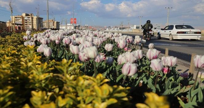 Mardin'de yeşillendirme çalışmaları devam ediyor