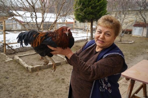 Bahçesinde beslediği tavuk horoza dönüştü
