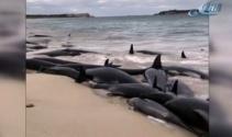 Avustralyada 150 balina karaya vurdu