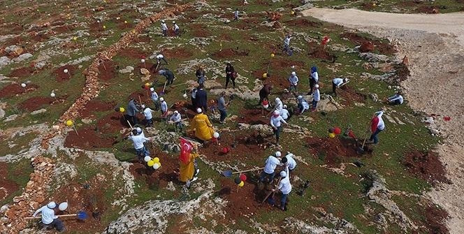 Türkiye'nin ilk Zeytin Ormanı kuruldu