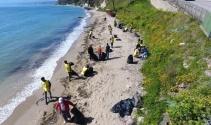 Sinop'ta yunus ölümleri araştırılıyor
