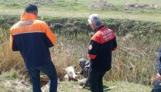 Bataklık kanala düşen düve AFAD ekiplerince kurtarıldı