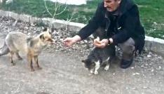 Kedinin ekmeğine tilki ortak oldu
