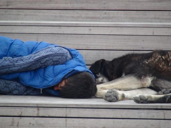 Gören duygulandı! Köpeklerle aynı bankta...