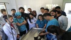 Öğrenciler uygulamalı eğitimlerini Osmaniye Belediyesi Hayvan Barınağında yapıyor