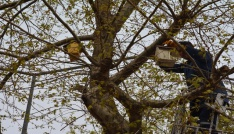 Görele Belediyesinden  kuş yuvası
