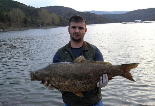 Çok sayıda ölü balık, kıyıya vurdu