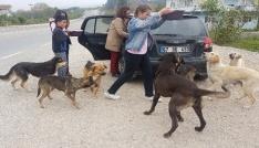 (Özel Haber) Öğrencileri ile sokak köpeklerine sahip çıktı