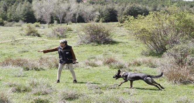 Köpekli arama timleri Afyonkarahisar'da yarıştı