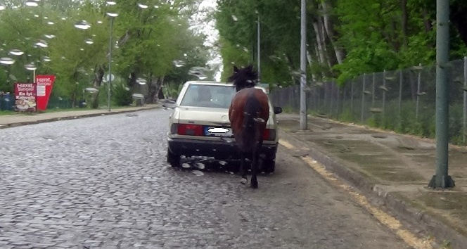 Trafikte ata işkence