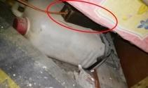 Afrin'de yatağın altına tuzaklanmış EYP imha edildi
