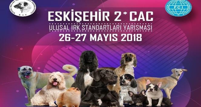 Köpek ırkları Eskişehir'de yarışacak