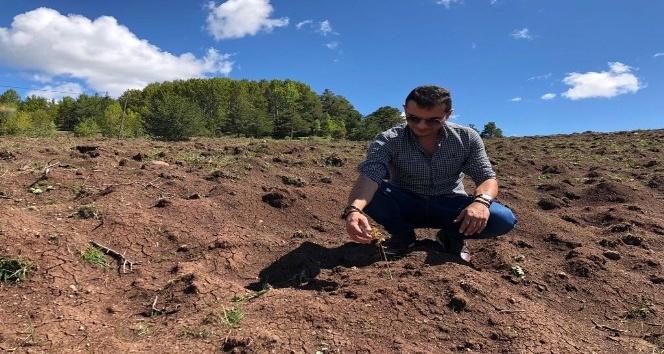 """Dünyada """"kara elmas"""" olarak bilinen trüf mantarı Giresun'da da yetiştirilecek"""