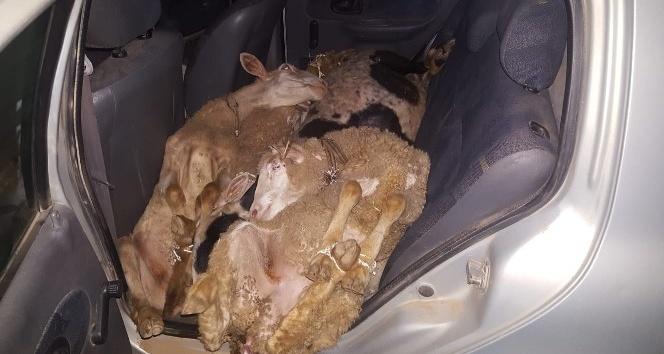 Çaldıkları koyunları arabada bırakıp kaçtılar