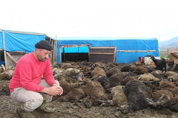 Çadırda havasız kalan 100 koyun telef oldu