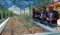 Türkiyenin en uzun ikinci türbesine ziyaretçi akını