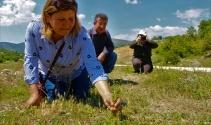 Kayıp bitki 130 yıl sonra Amasya'da bulundu!