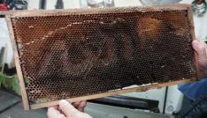 Arılar petek üzerine Allah yazdı