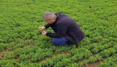 Siirtte sertifikalı tohum üretimi artıyor