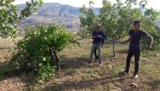 Siirtli çiftçiler bağlarında ilaçlama çalışması başlattı