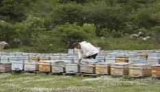 Beytüşşebaplı arıcılar Katoya çıkmaya başladı