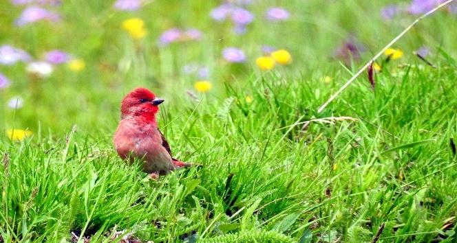 Ardahanda 90 kuş türüne rastlandı