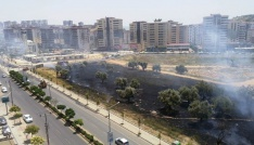 Çocukların kibritle oyunu zeytin ağaçlarını yaktı