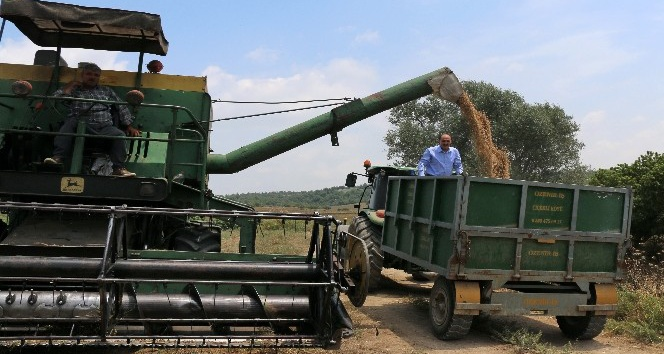 Adana'da nohut ekim alanları arttı