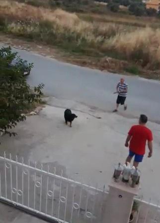 Vahşet! Köpekten rahatsız olunca...