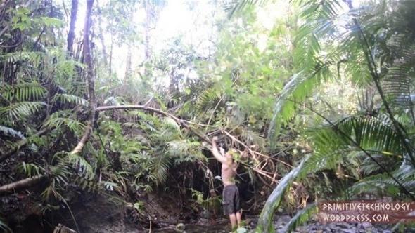 Ormanda yaptığı şeyle dünyayı şaşkına çevirdi!