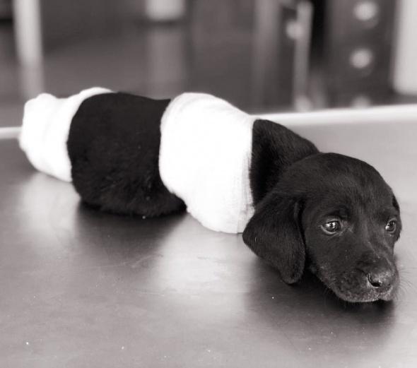 Yavru köpek vahşetinde flaş gelişme! Gözaltına alındı...