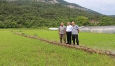 Karabükte çeltik ekimi başladı
