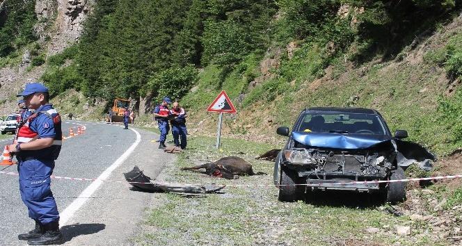 Rizede kamyonet yol kenarında hayvan otlatan anne ile kızına çarptı: 1 ölü, 1 yaralı
