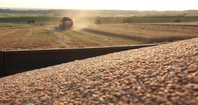 Çiftçilerin buğday hasadı mesaisi sürüyor