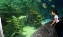 Avrupa akvaryumlarındaki en büyük deniz kaplumbağalarından Iggy İstanbulda