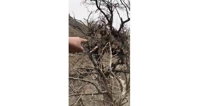 Teröristlerin ağaçlardaki gözetleme kuleleri deşifre oldu